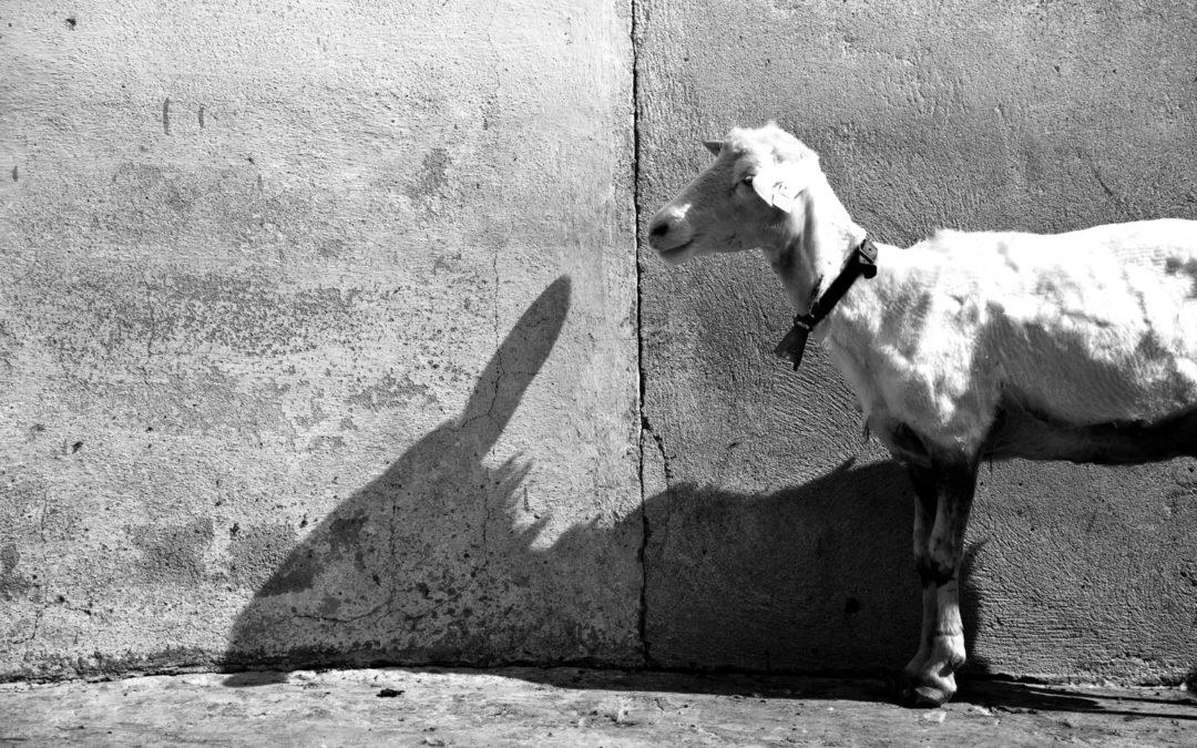 Una giornata col pastore